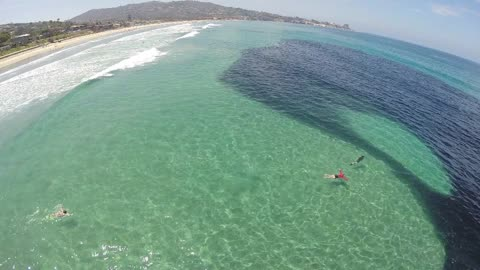 Millions Of Anchovies Make Rare Appearance At Scripps Pier