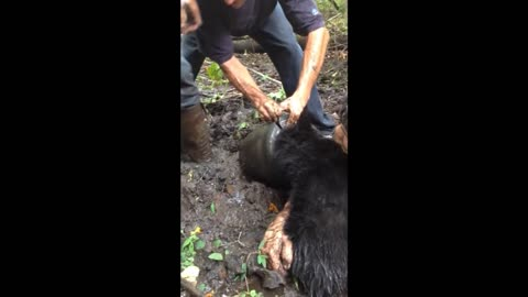 """Bucket Bear"" Rescued By Group In Clarion County"
