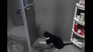 Confused cat struggles to drink water from shower faucet