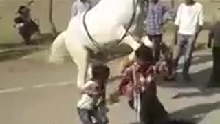 cute little boy dancing with trained horse  - Video