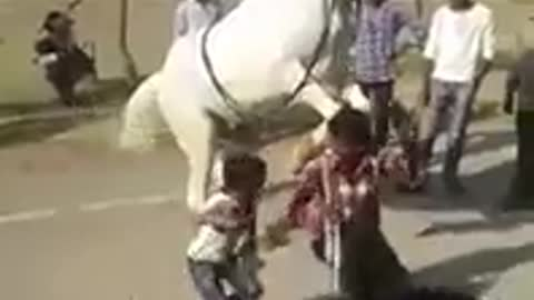 cute little boy dancing with trained horse