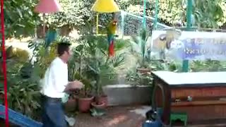 Funny Animals - Parrot riding a scooter Funny Videos - Video