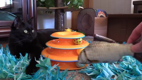 Cat Celebrates Birthday With A Palette Of Amusing Toys