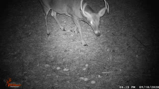 15 Seconds of Whitetail: Episode 2