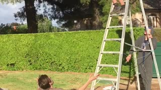 Ladder jump into friend on chair - Video