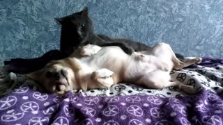 The cat is 1000!!!!!!!! times licks the dog and does not want to stop there!  - Video
