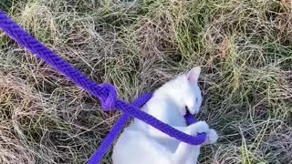Kitten plays with Horse