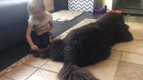 Little girl nurses burrs out of dog's fur
