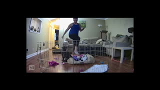 Dog Cage Mishap - Video
