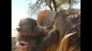 Rescued baby baboon grooms caretaker
