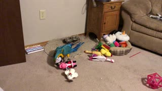 Parrot loves her squeaky toys more than a dog.
