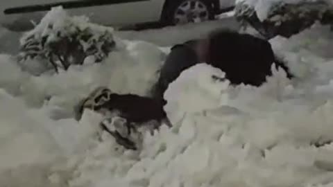 Dude lays out snowman during quarantine snowfall