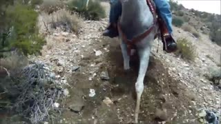 Extreme Horse Ride On A Natural Terrain - Video