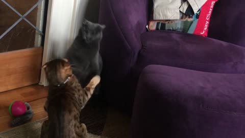 Slow Motion Cat Fight