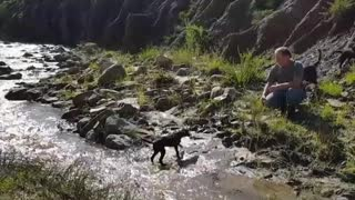 Three dogs cross brook one faceplant - Video