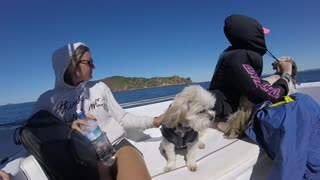 Puppy in a little coat loves riding the waves!  - Video