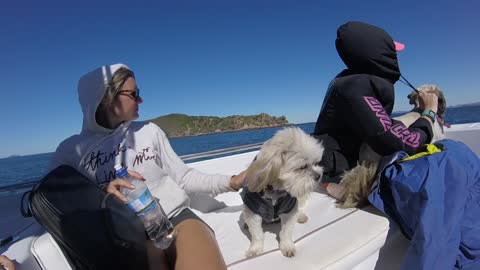 Puppy in a little coat loves riding the waves!