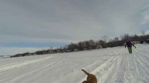 Toller Play Time on the Ottawa River