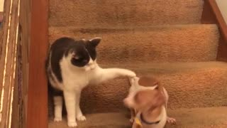 Spotted dog runs really quickly along staircase away from cat  - Video