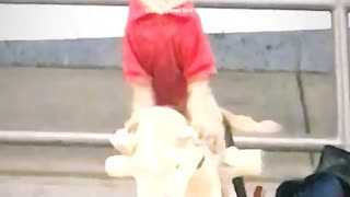 Dog with red shirt on sitting on stuffed pony