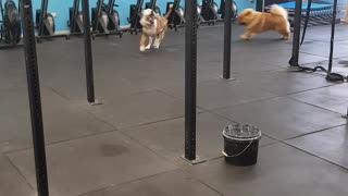 Puppies Do Their Own Workout At Dog-Friendly Gym