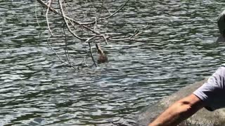 Duck Rescued from Abandoned Fish Hook