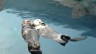 Adorable Sea Otters Hold Hands While Napping