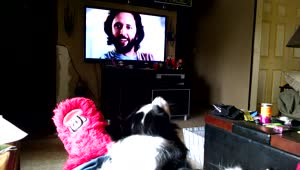 Dog reacts to his favorite commercial - Video