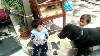 Twin babies adorably entertained by loving Labrador - Video
