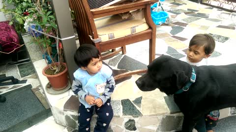 Twin babies adorably entertained by loving Labrador