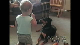 Dog And Toddler Girl Share Lollipop - Video