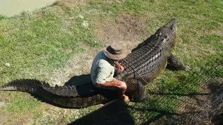 Crazy Crocodile Expert Takes One On A Ride - Video