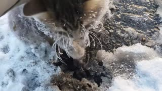 Frozen Kitty Gets A Second Chance At Life - Video