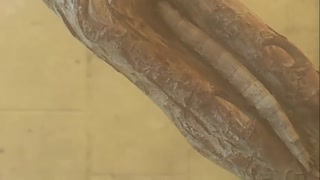 completely Camouflaged Caterpillar - Video