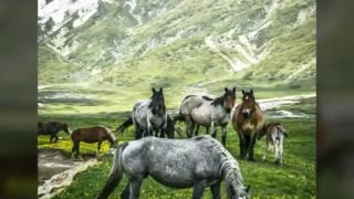 The Spirit Of Horses – Truly Majestic And Beautiful