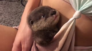 Otter Pup Cuddles - Video
