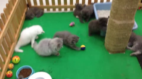 Cute Baby Kitten meows because Mama Cat is not there