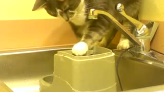 Cat has an odd way of drinking water - Video