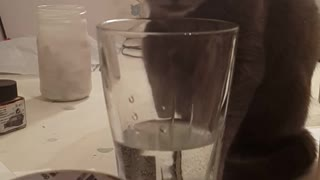 Naughty Russian Blue Masha and a glass of water - Video