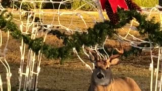 Buck Wants to Join Santa - Video