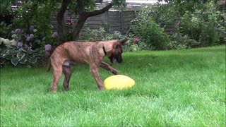 My puppy is playing with the crazy running egg - Video