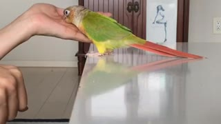 Parrot plays guessing game with owner
