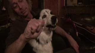 """Border Collie freaks out when man """"steals her nose"""""""