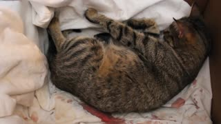 Cat Giving Birth - Video