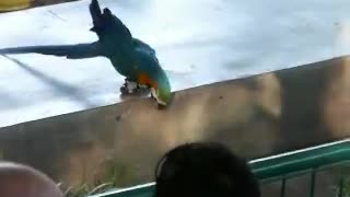 Funny Animals - Parrot on rollerblades
