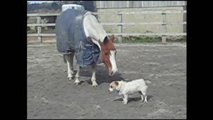 Horse and dog are best friends - Video