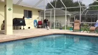 Puppy shows off magnificent pool dive in slow motion - Video
