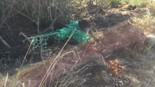 Seal Rescued from Fishing Net - Video