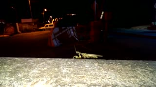 world of wildlife - praying mantis moves its wings -  Episode 7 - Video