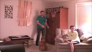 Basketball-loving Bulldog can shoot hoops - Video